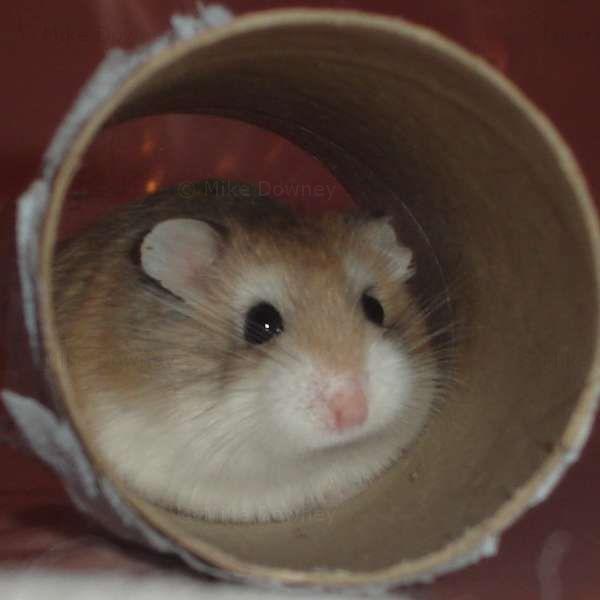 Alysia in a tube