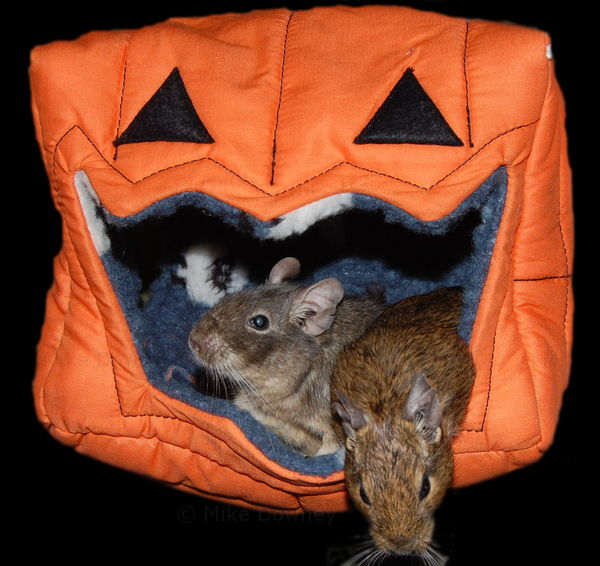 Remy and Emile in the Pumpkin
