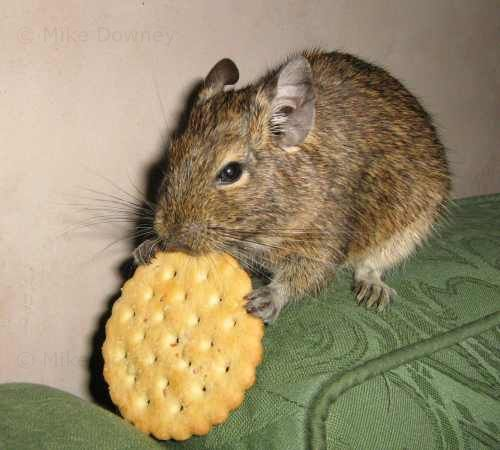 emile eating a cracker