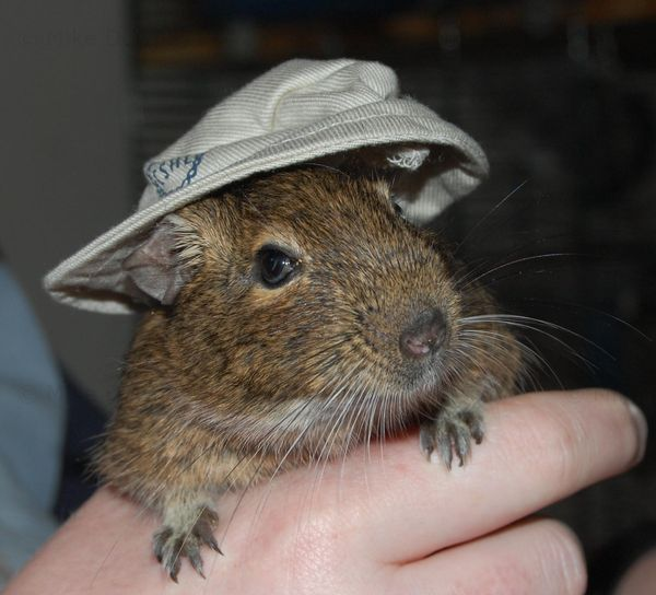 Emile wearing a hat