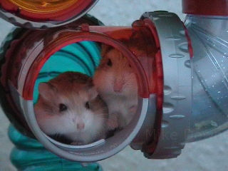 Gel and Ira in the tubes