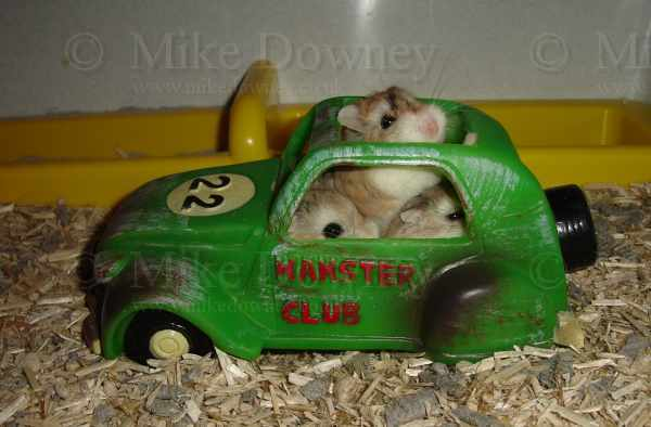 Perl, Ruby and Alysia in the hamster car