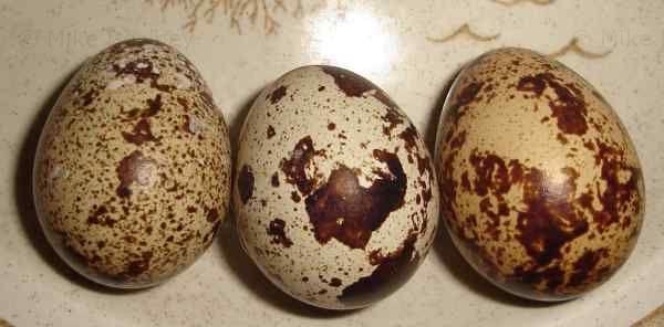 3 quail eggs