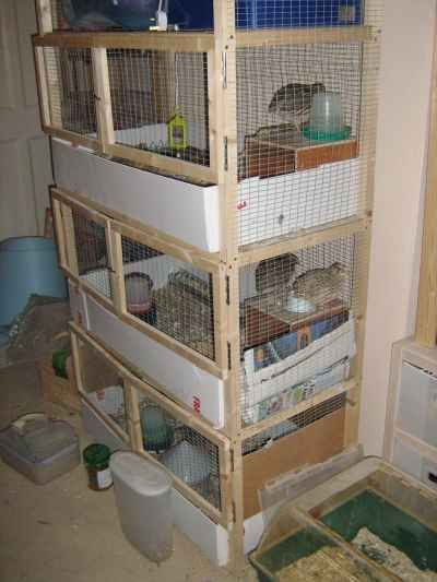 The multi-storey quail house