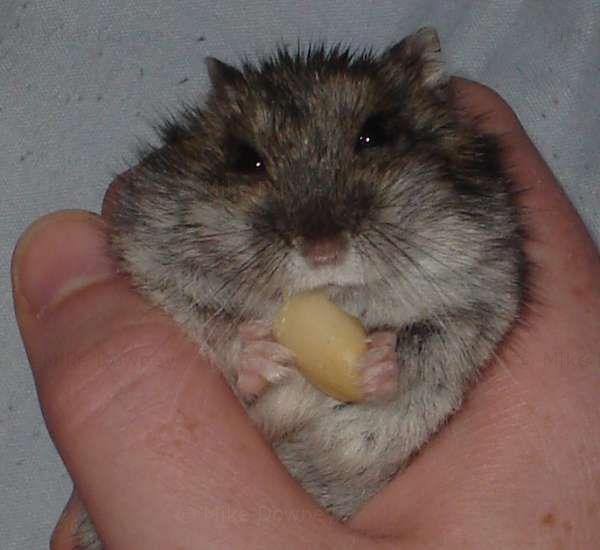 Reggie eating a peanut