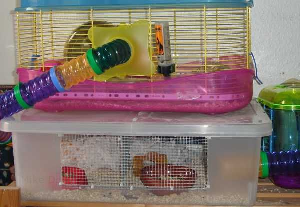 Hamster cage with wire divide