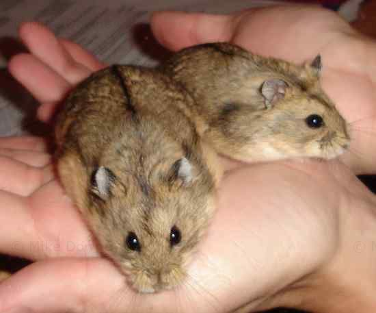 Vande and Graaff, our 2 new hamsters