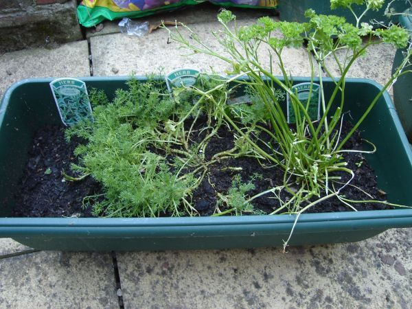 nibbled herbs
