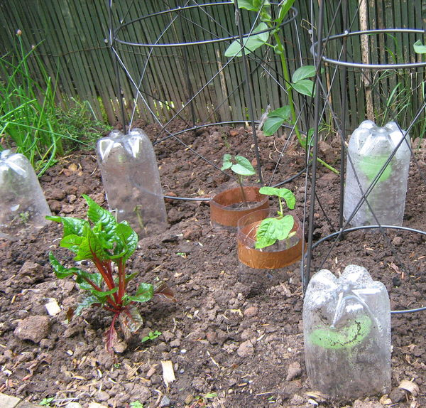 Garden, including cloche and copper rings