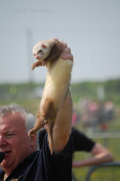 Ferrets