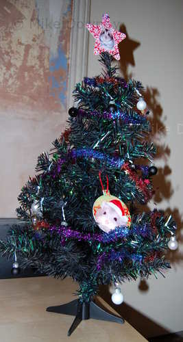 The tree with proper decorations