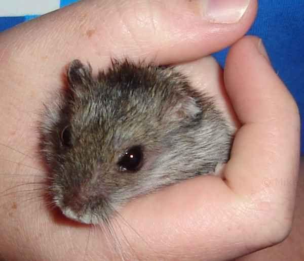My Hamsters Reggie