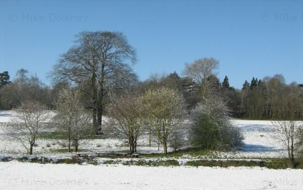 Charterhouse fields in the snow